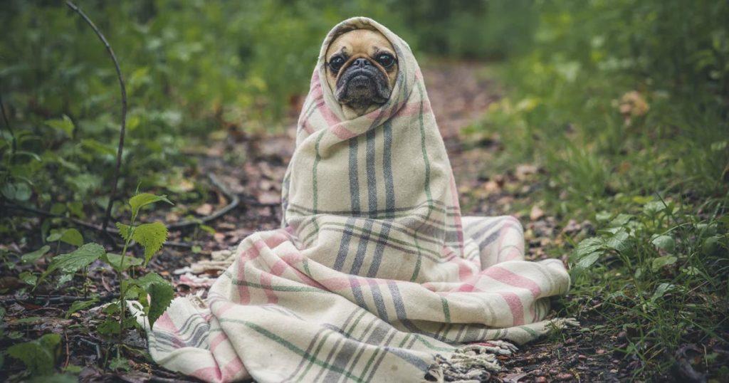 Le CBD protège du froid