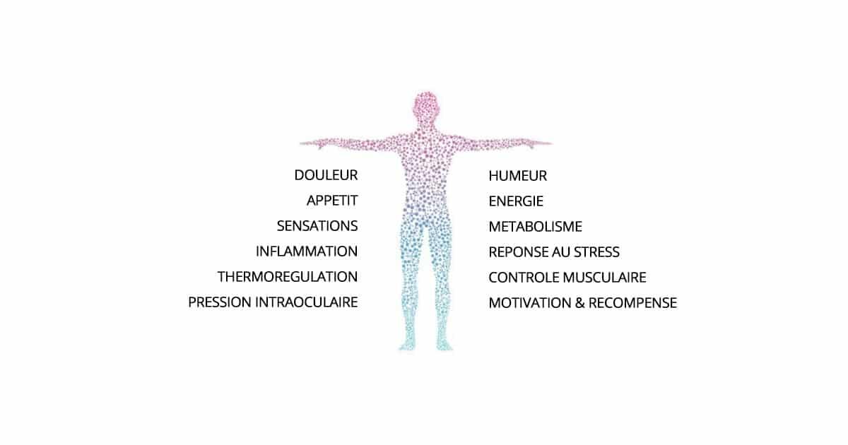 Système endocannabinoïde et CBD